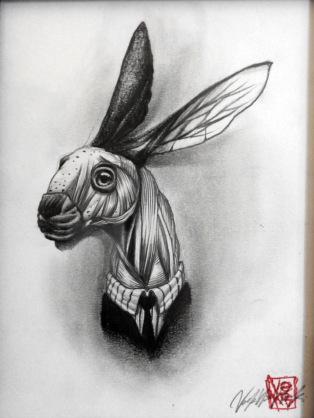 Portrait d'écorchés Lièvre - Veks Van Hillik
